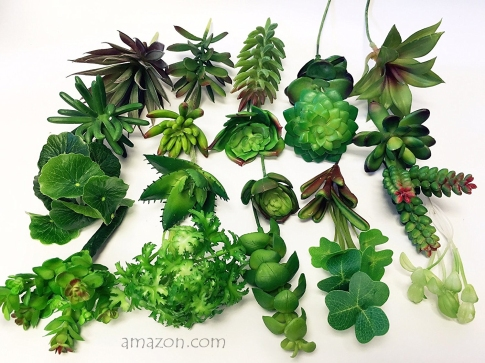 Amazon Succulents (1)