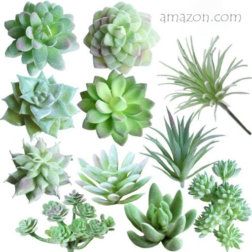 Amazon Succulents (2)
